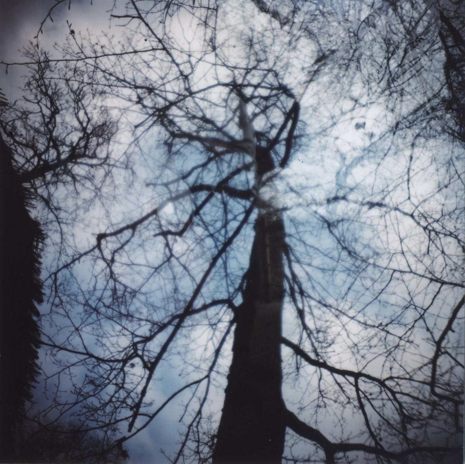 arbre006