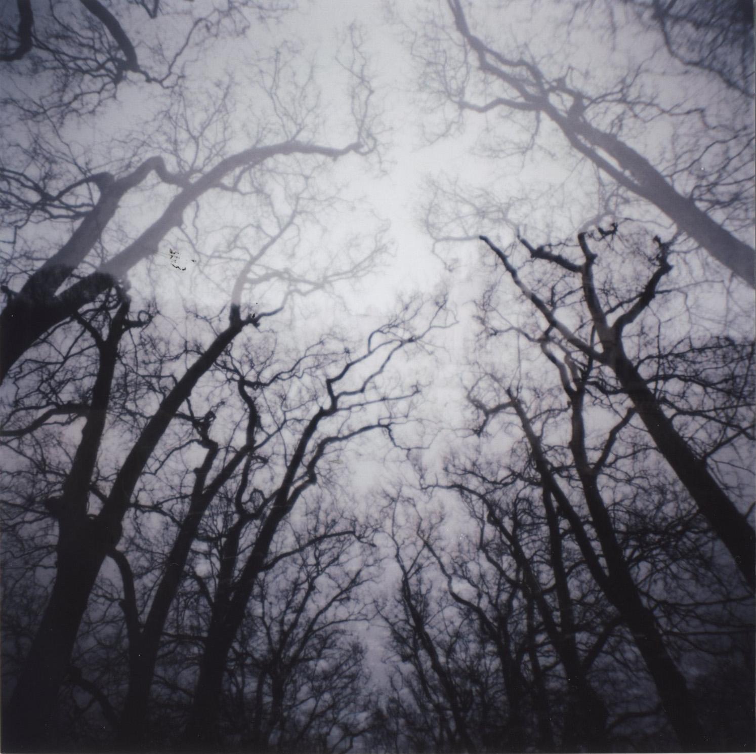 arbre007