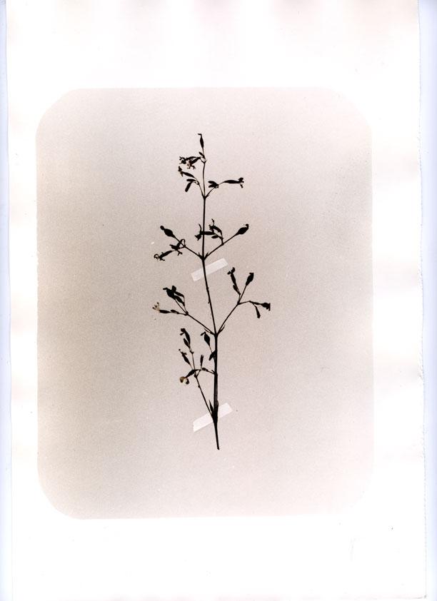 herbier001