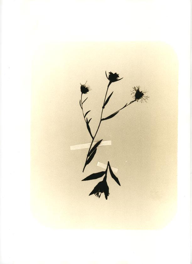 herbier010