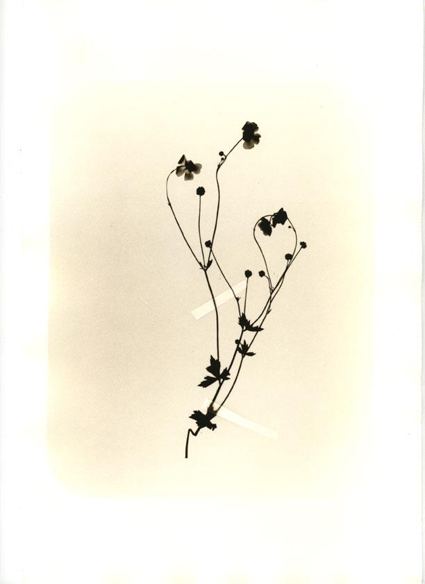 herbier012