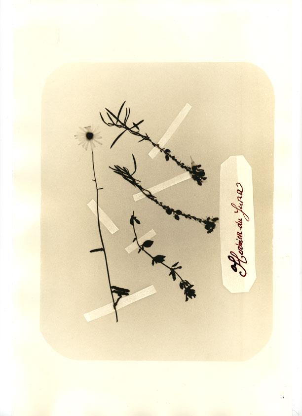 herbier027