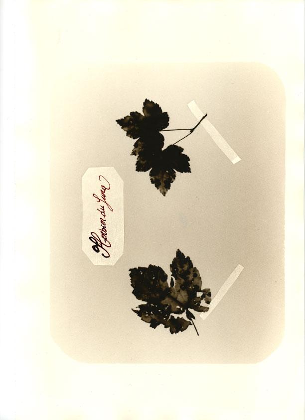 herbier029