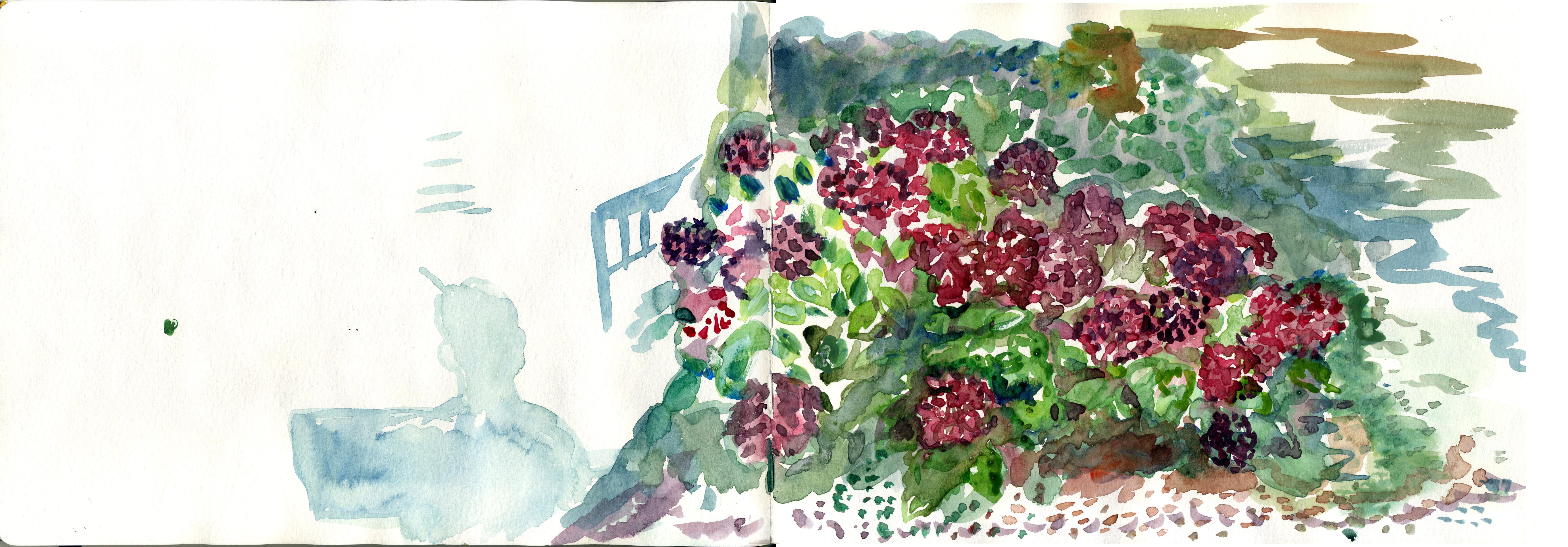 horetensia-jardin