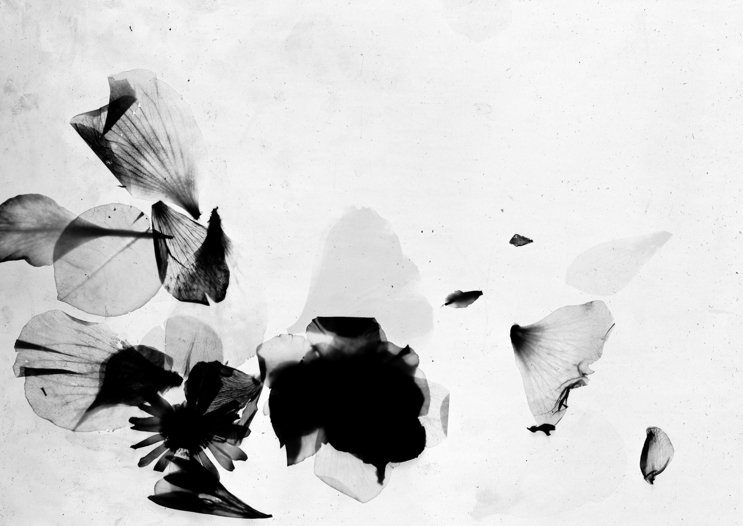 Photogramme-01