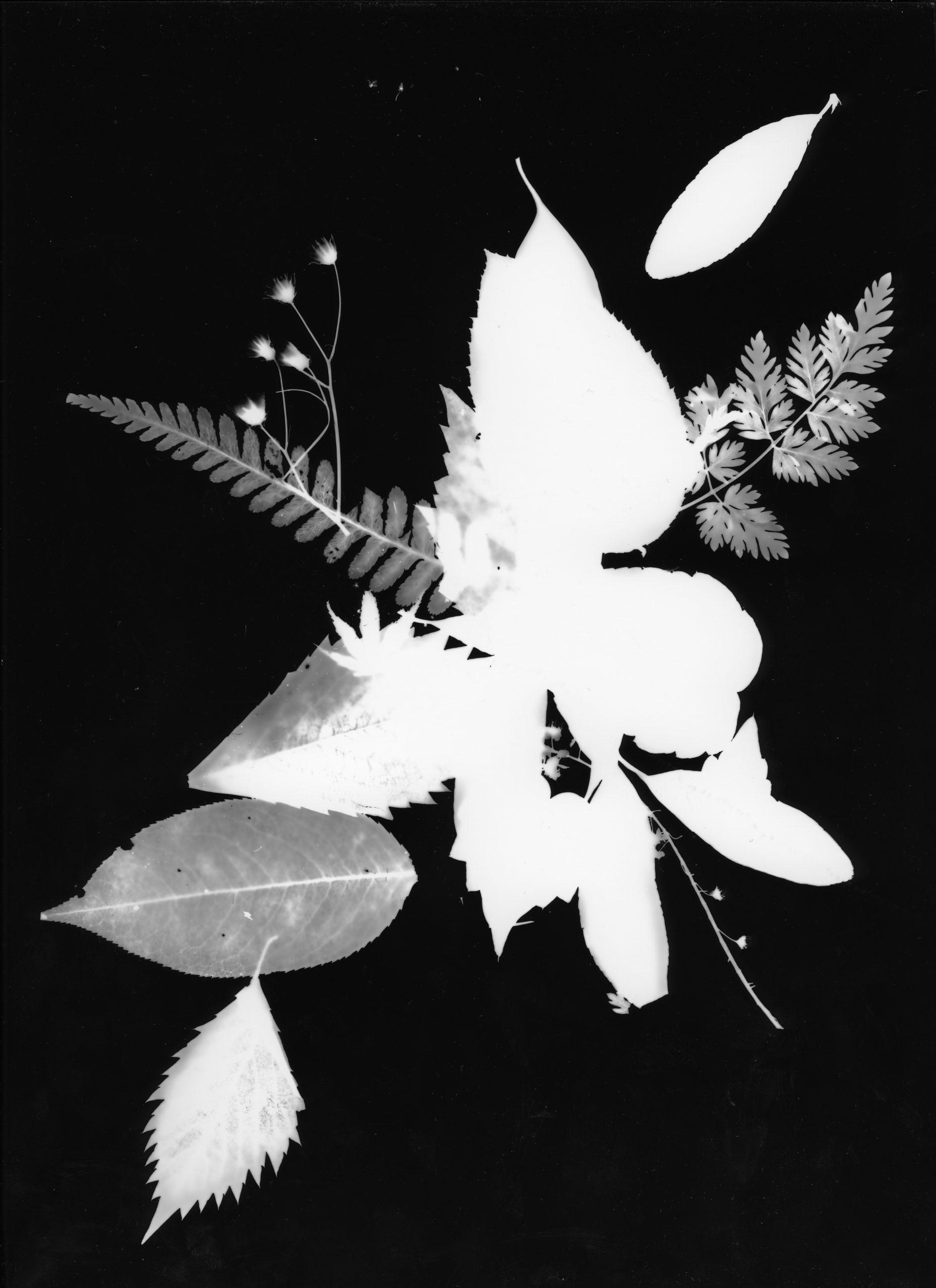 Photogramme-02