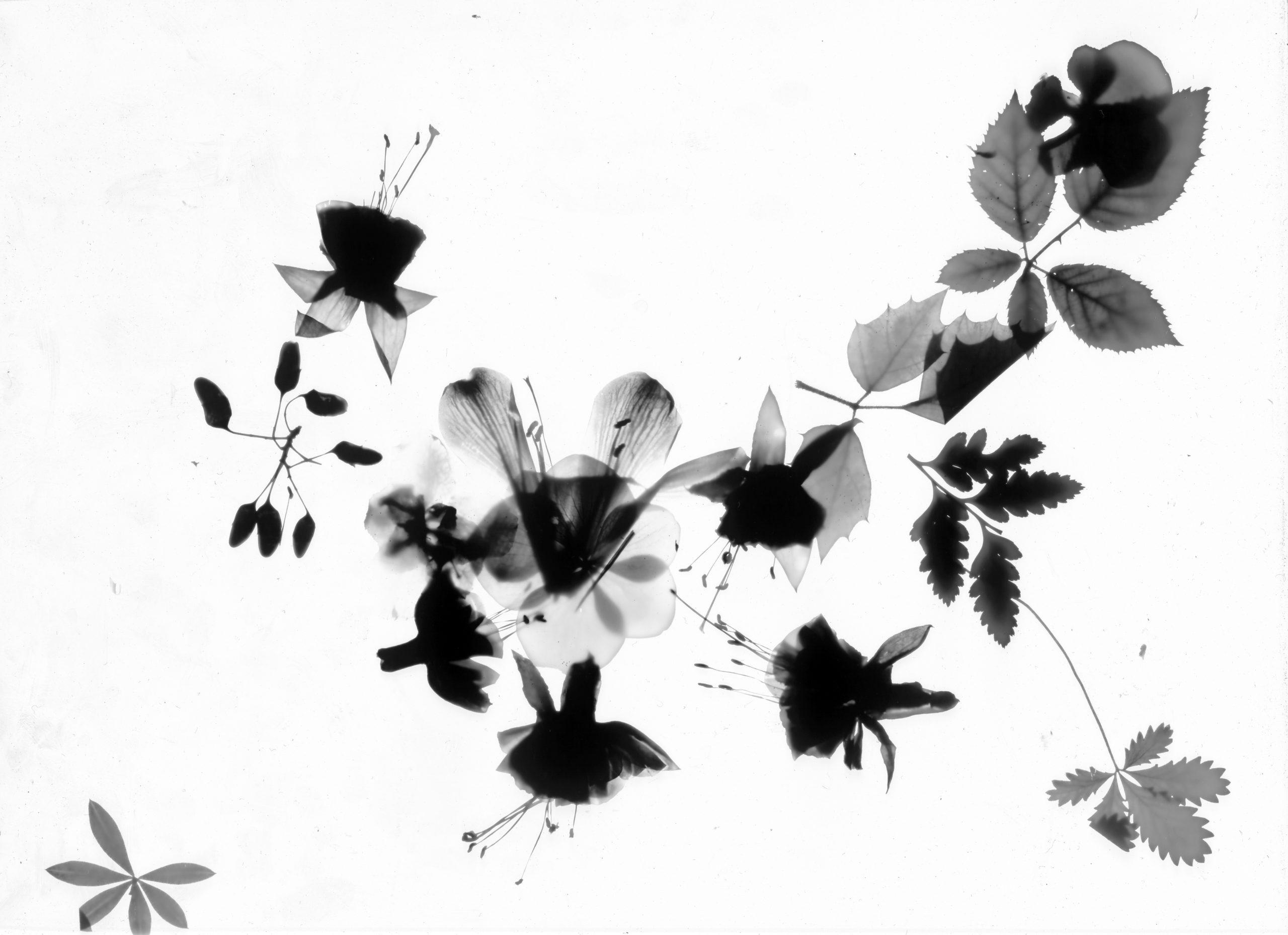 Photogramme-03.bis