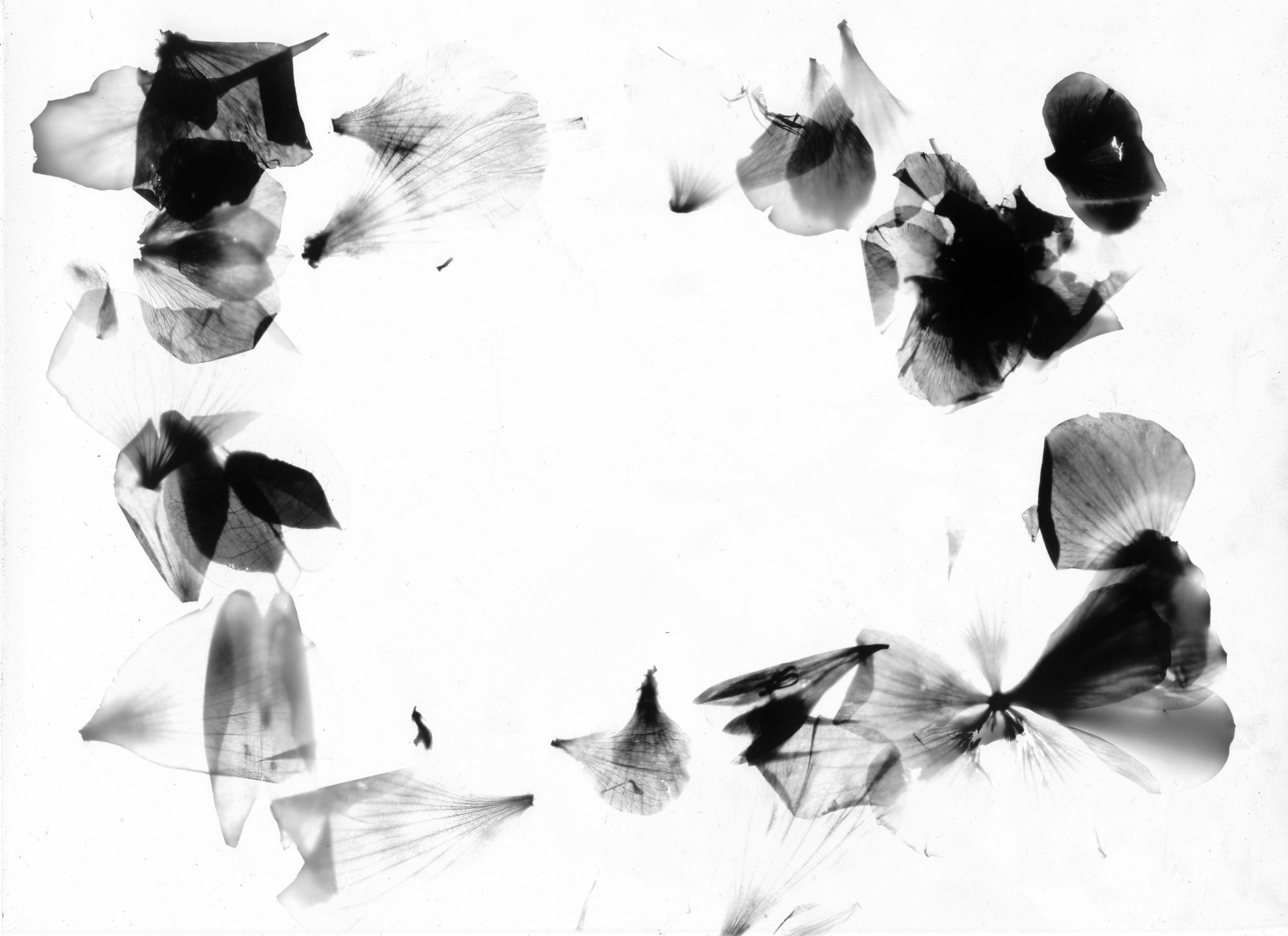 Photogramme-05