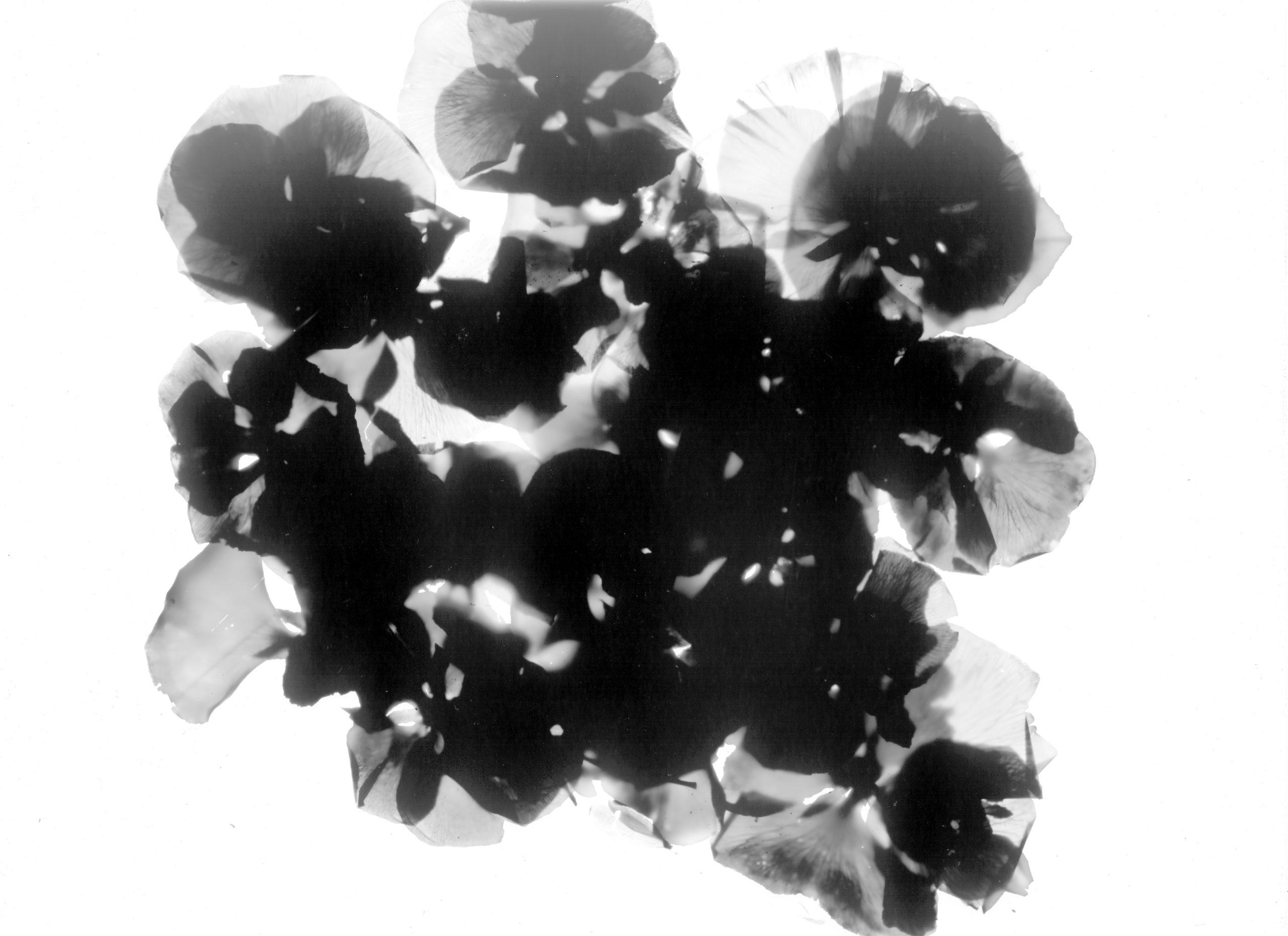 Photogramme-09